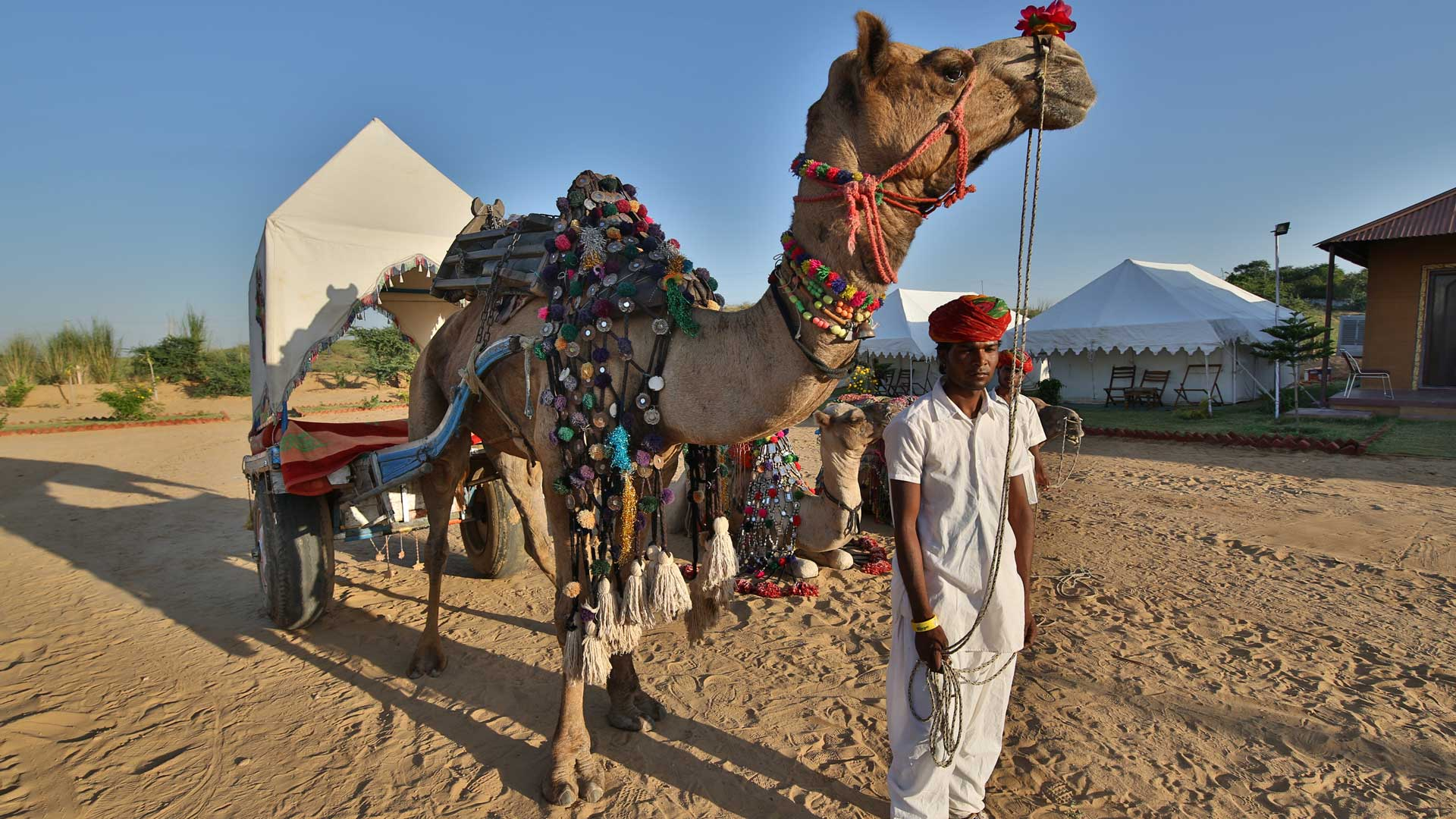 camp pushkar,desert camp,tent pushkar,fair accomodation, adventure pushkar safari, camel safari